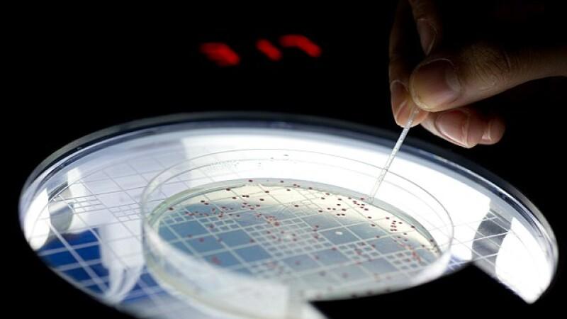 bacterie, laborator