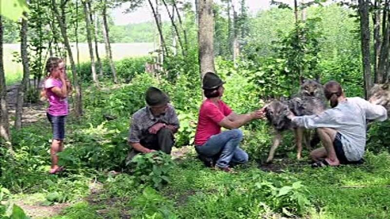 O familie din Belarus traieste alaturi de 3 lupi