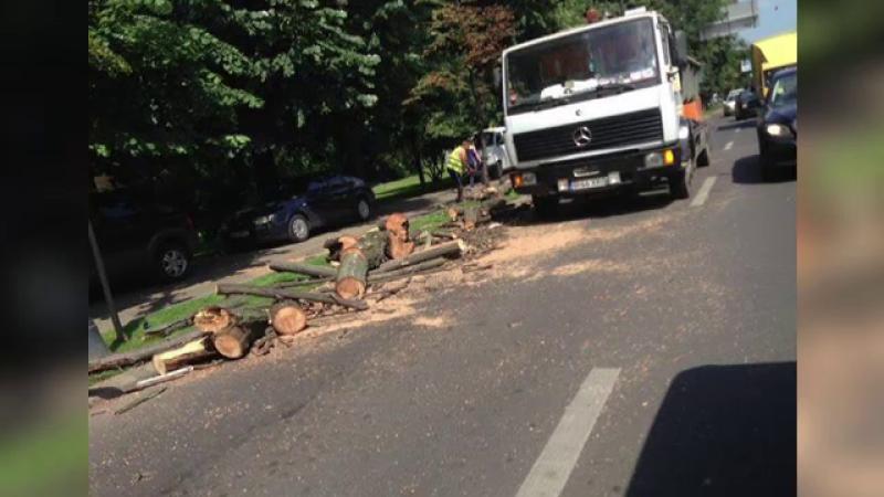 Scandal in jurul copacilor taiati in Capitala. Autoritatile spun ca erau \