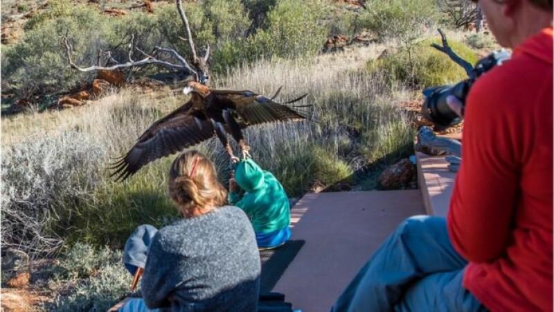 atac vultur