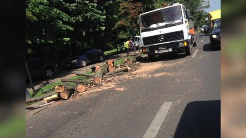 copaci, primarie, Bucuresti