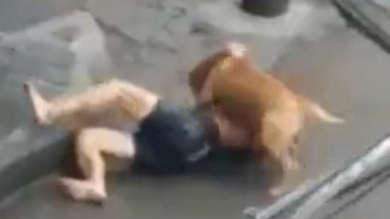 barbat atacat de pitbull