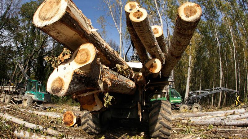 copaci taiati, defrisare