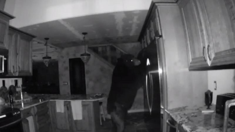 Un urs a intrat in casa unui american si a petrecut 5 ore inauntru. Ce au surprins camerele de supraveghere