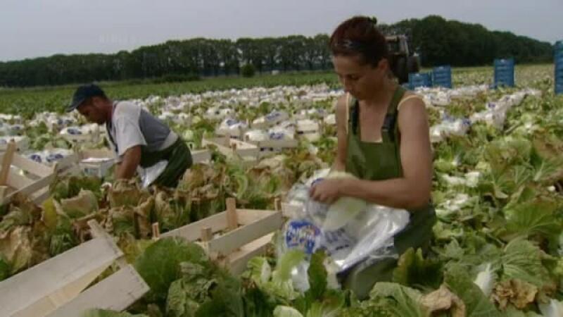 romance la munca in Spania