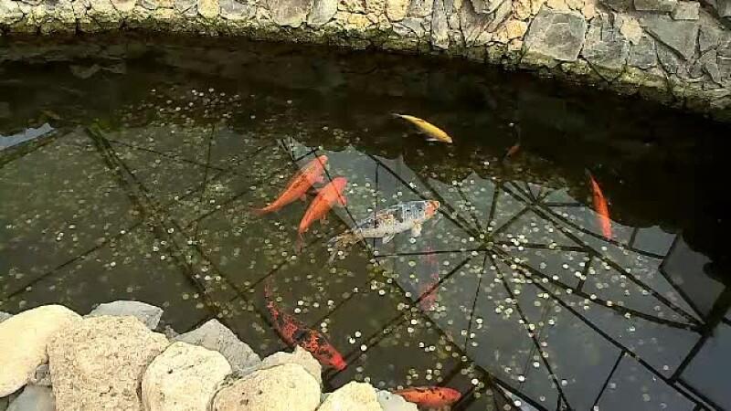 Bazinul peştilor exotici de la Delfinariu, umplut cu monede de turişti