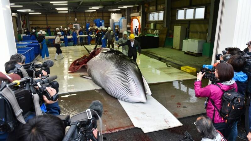 balena, Japonia