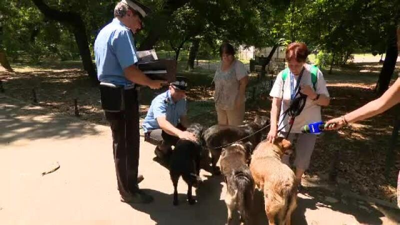 politia animalelor, caini