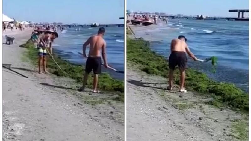 Tânăr filmat în timp ce aruncă înapoi în apă algele de pe plajă, la Mamaia