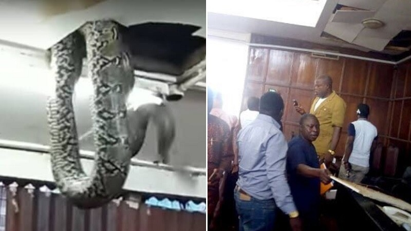 Sarpe cazut din tavan in Nigeria - 1