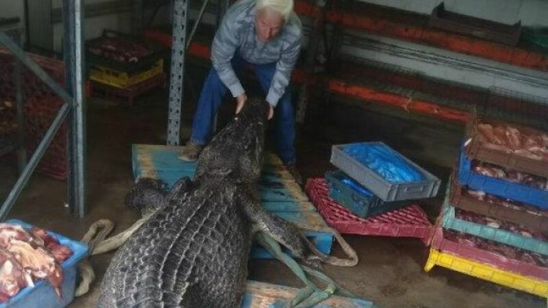 crocodil Australia - 4