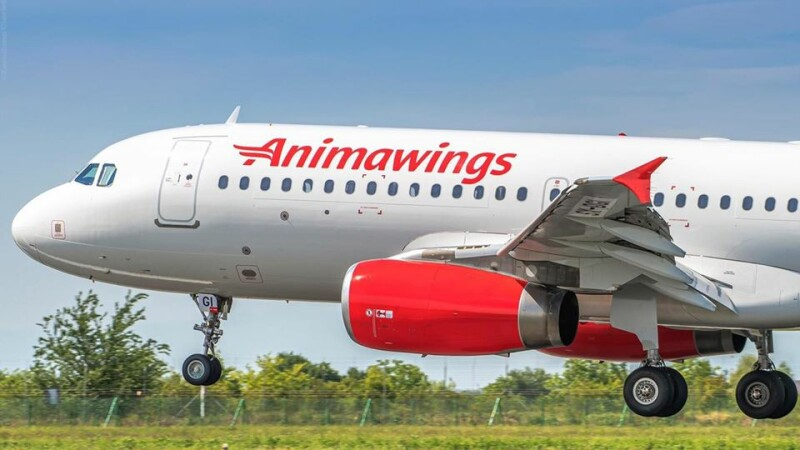 Animawings