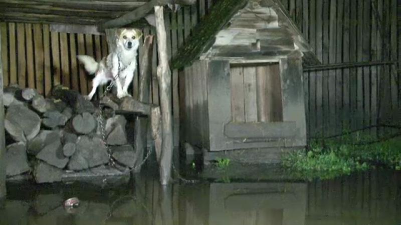 inundatii caine
