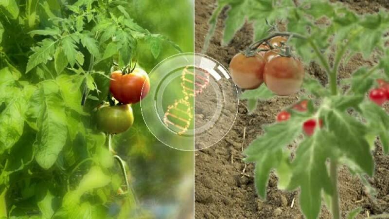Cum ne dam seama daca rosiile de la piata au gust sau nu. Secretul, dezvaluit de agricultorii romani