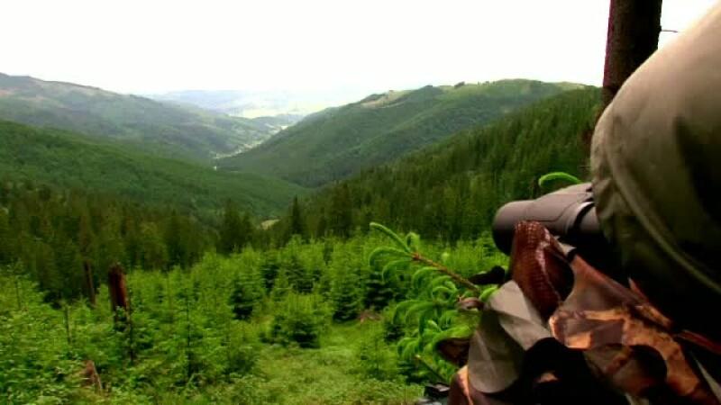 Wild Bucovina