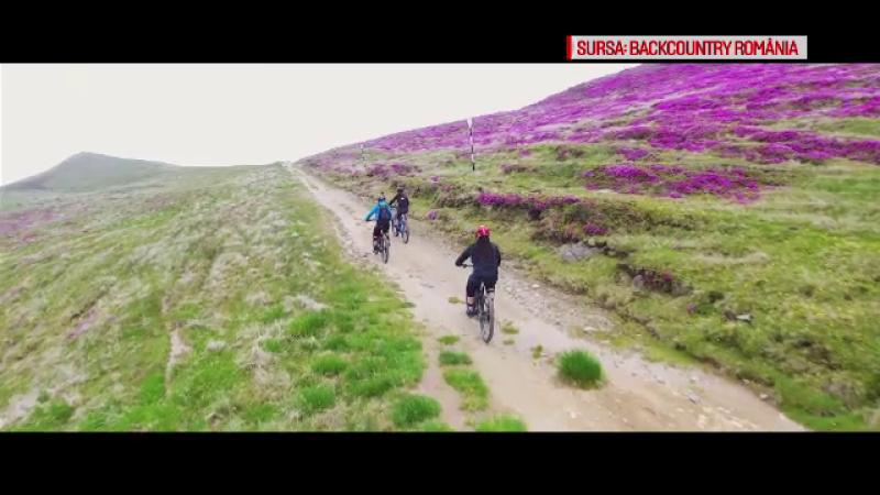 Biciclete electrice pe munte