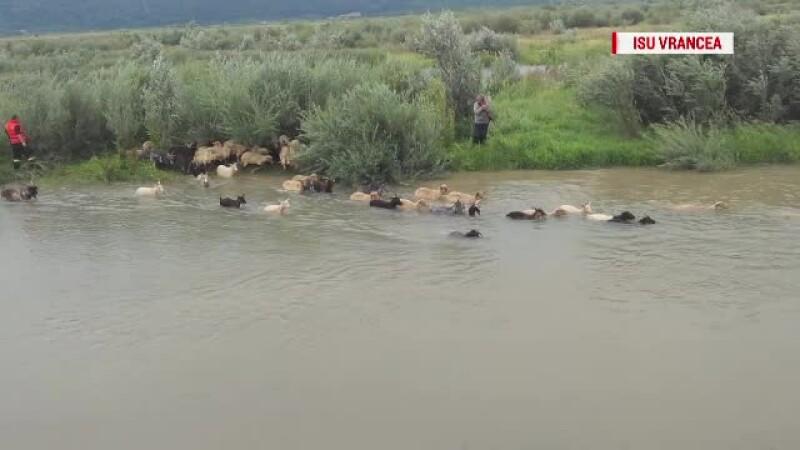 inundatii cioban oi