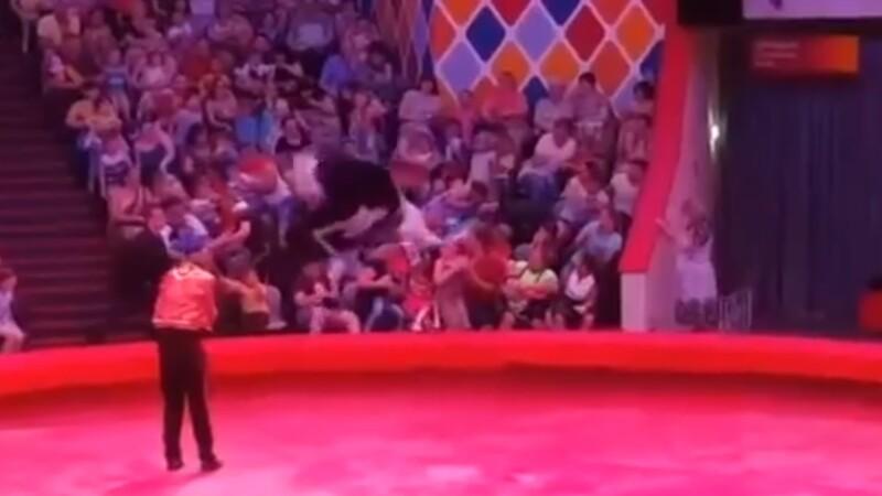 Panică la un circ din Rusia. Un struț s-a urcat peste spectatori și i-a lovit cu picioarele