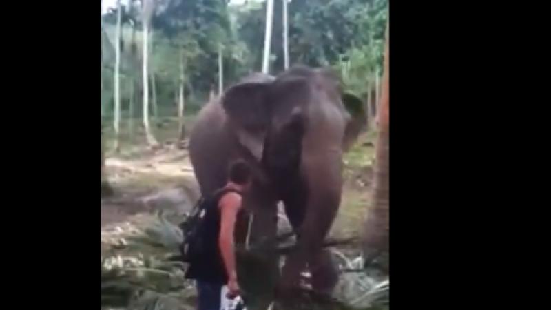 Ce a pățit un turist din Thailanda după ce a atins un elefant. VIDEO