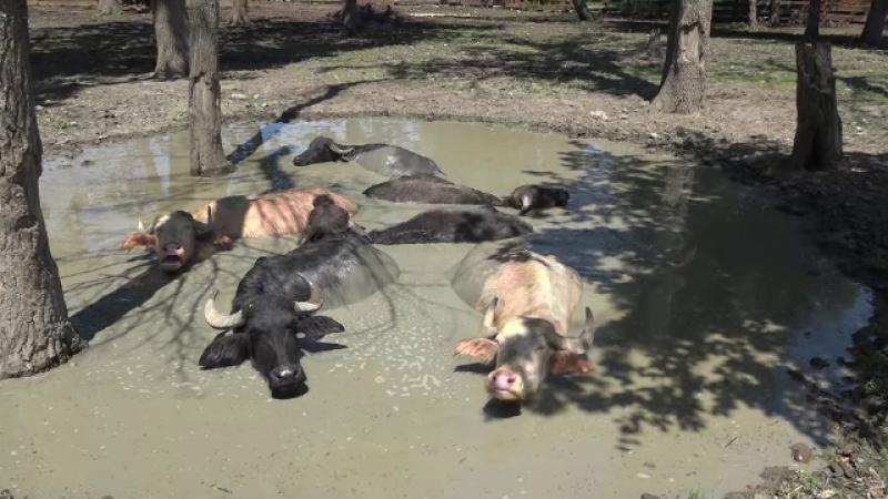 Canicula vine cu tratamente speciale pentru animalele de la zoologică din Târgu Mureș