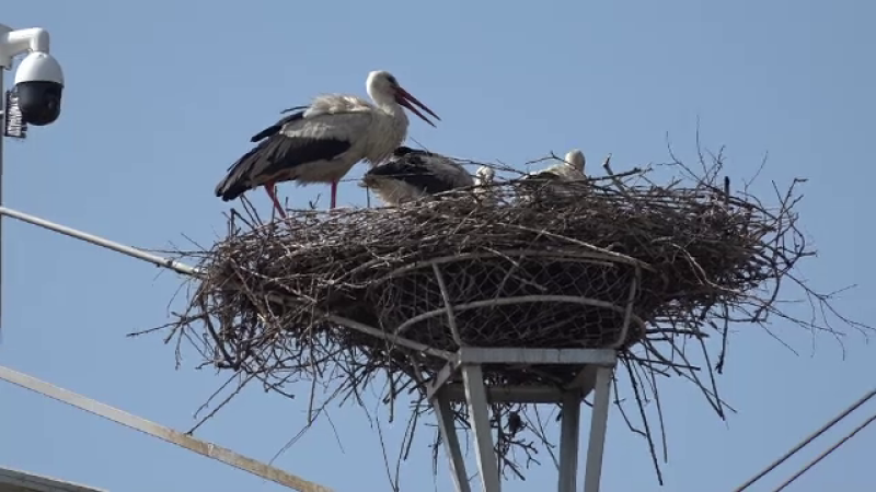 Ornitologii au început \