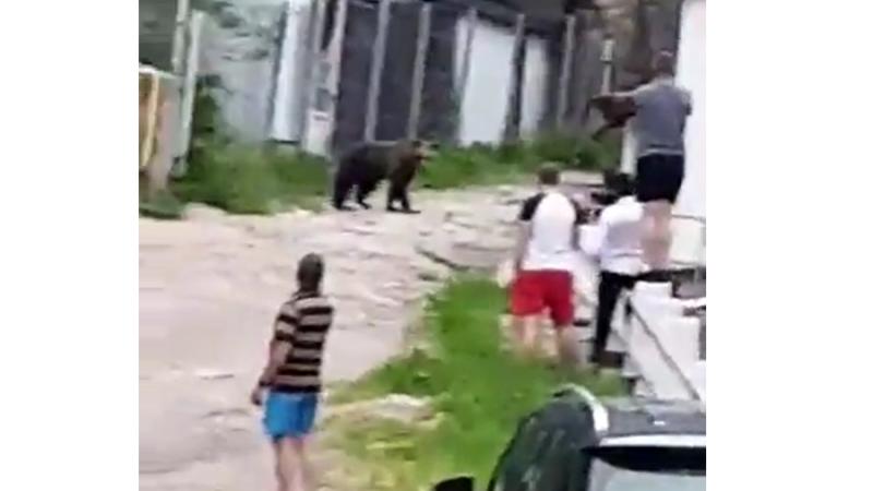 Turiști inconștienți. Filmau și vorbeau cu ursul de la doar câțiva metri distanță