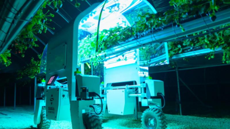 Efectele pandemiei. În lipsa oamenilor, fermierii britanici vor folosi roboți pentru a culege fructe