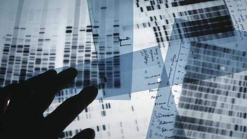 Teste ADN