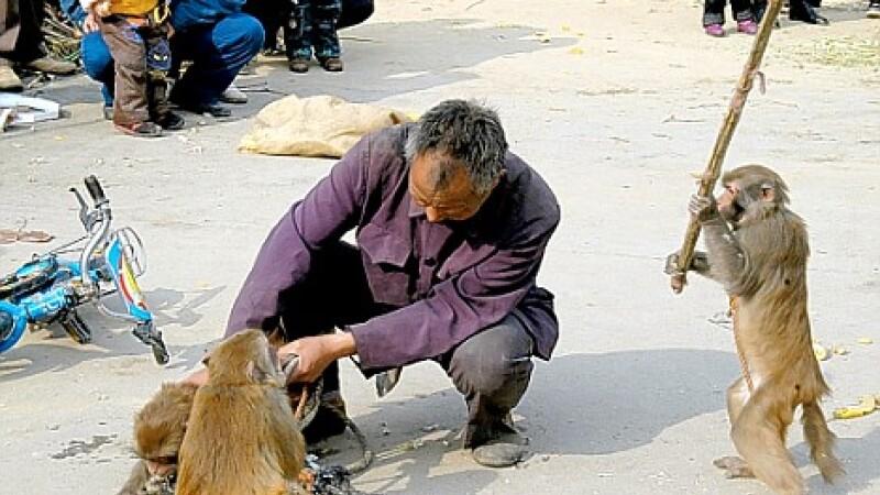 Pay back time! A luat o mama de bataie de la maimutele pe care le maltrata!