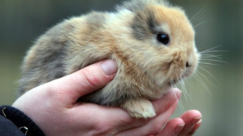 Cel mai dragalas iepure din lume a fost omorat de cel care trebuia sa-l faca vedeta