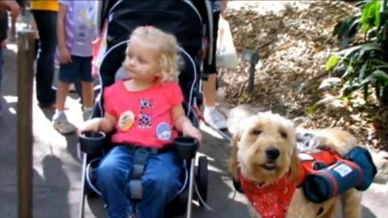 VIDEO. Prietenie impresionanta. Cainele care ii salveaza viata unei fetite de 3 ani in fiecare clipa