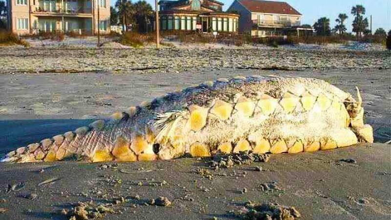 FOTO. Monstru marin esuat pe o plaja din America. Trecatorii se inghesuie sa vada ciudatenia