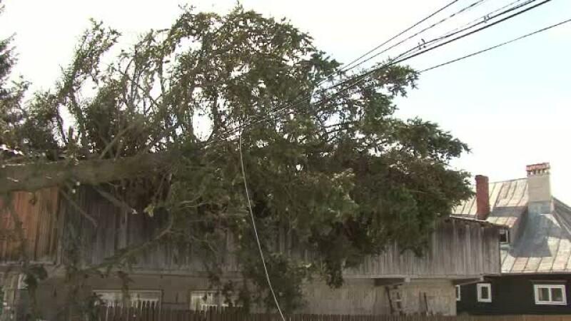 Copac cazut pe casa