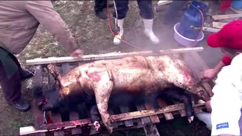 parlit porc