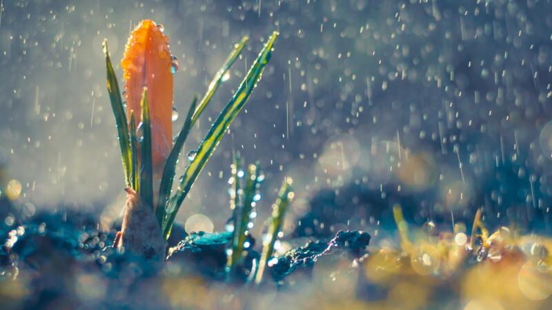 ploaie, primavara