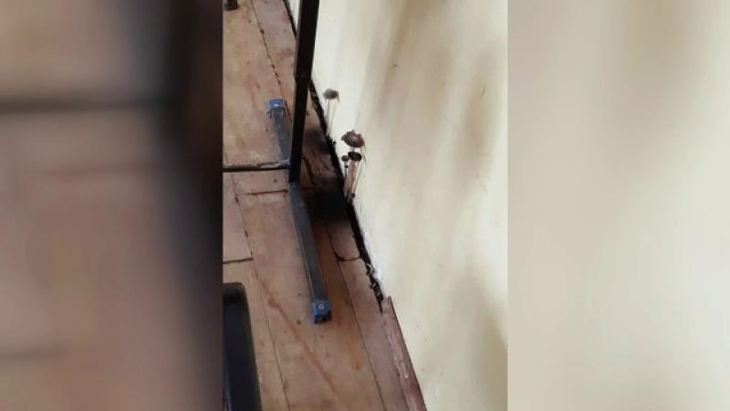 Directorul unui liceu din Constanta, amendat cu 1.000 de lei dupa ce intr-o clasa au aparut ciuperci pe un perete. FOTO