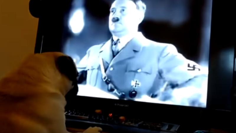 Un bărbat riscă să ajungă după gratii, după ce și-a învățat câinele să facă salutul nazist