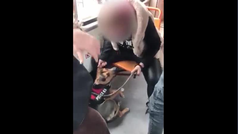 VIDEO șocant. O femeie bate un câine într-un tramvai. Poliția Animalelor s-a sesizat