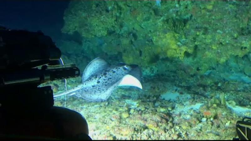 Descoperire importantă făcută în Oceanul Indian, la 100 de metri adâncime