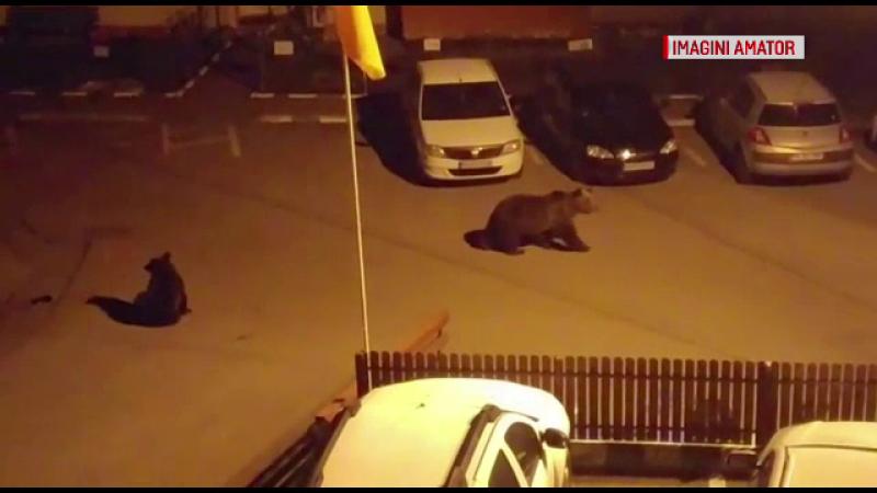 O familie de urşi a făcut picnic printre blocuri, în Buşteni. Reacţia localnicilor