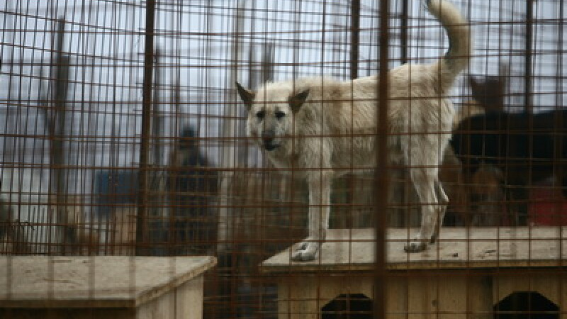 Mor oameni sfasiati de caini, autoritatile din Arges maraie unele la altele