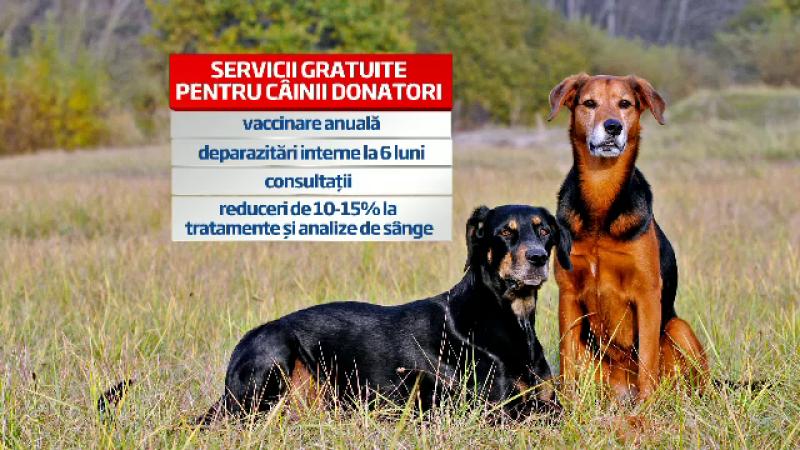Prima banca de sange pentru caini si pisici din Bucuresti: cum doneaza animalele sange