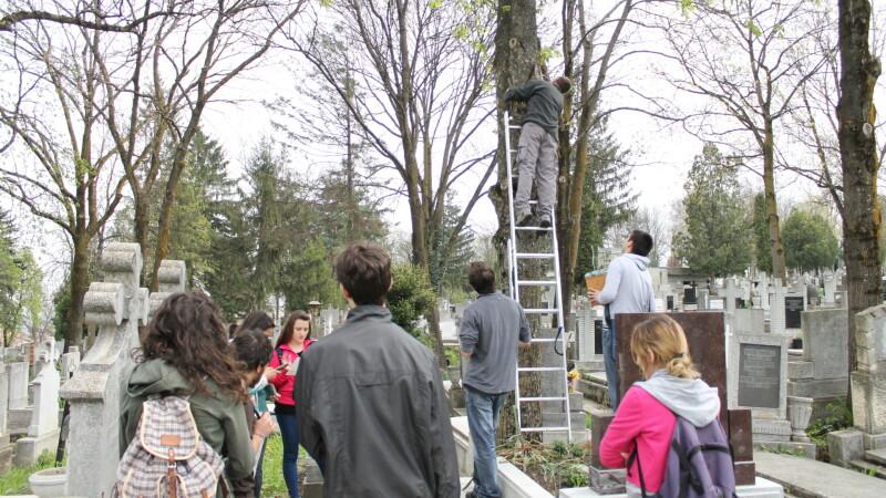 Cuiburi pentru pasarile Clujului. Societatea Ornitologica Romana a amplasat peste 1.000 de cuiburi artificiale in judet