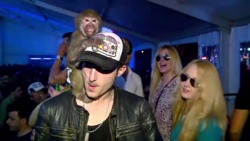 club Mamaia, maimuta
