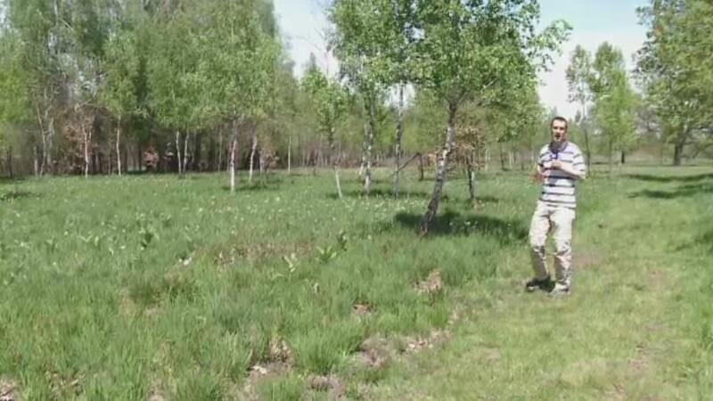 Coltul de rai din Muntii Fagaras. Cum arata in luna mai Poiana Narciselor, locul laudat in documentarul Wild Carpathia
