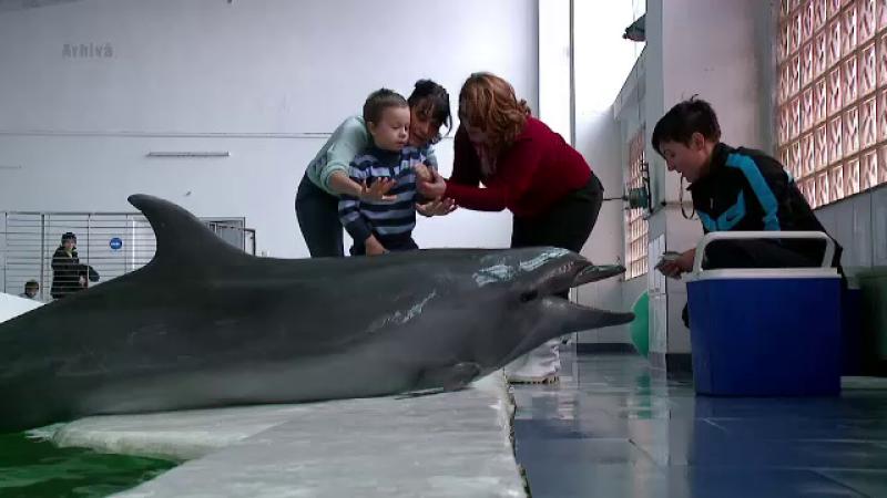 delfini - stiri
