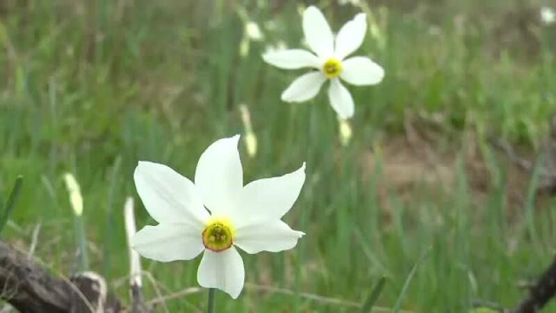 Narcise - STIRI