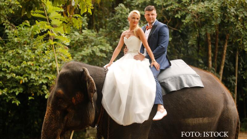 nunta calare pe elefant