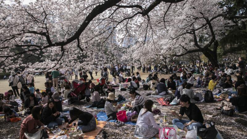Ciresi japonezi Tokyo