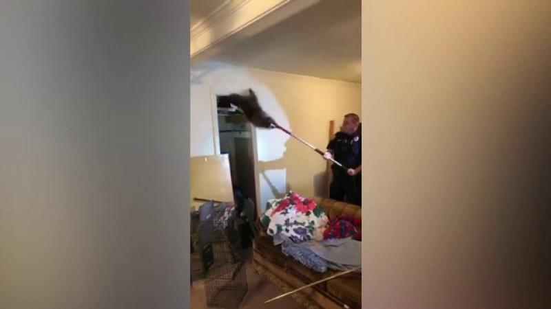 Tavanul unei case din SUA a cedat din cauza unor ratoni